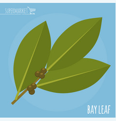 bay leaf flat design icon vector image vector image