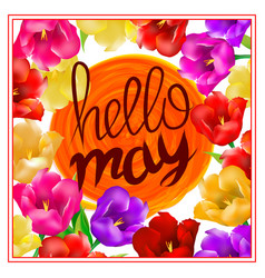 Hello may hand lettering with tulip flower vector