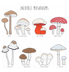 set of inedible mushrooms with titles on white vector image vector image