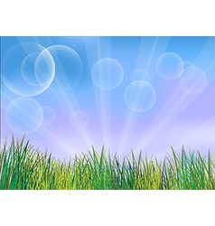 The green grasses vector