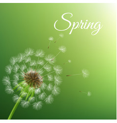dandelion and spring background vector image