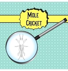 Gryllotalpidae european mole cricket vector