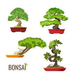 Set of bonsai japanese trees grown in containers vector
