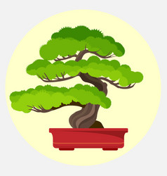 Bonsai pine decorative small tree growing in vector