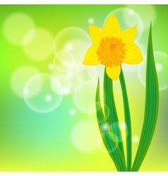 Card with daffodil on light green bokeh vector