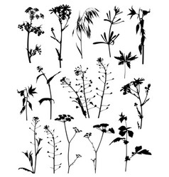 Silhouettes flowers and plants vector
