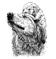 Labrador retriever 19 vector