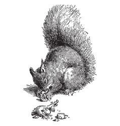 The squirrel with a broken leg vintage vector