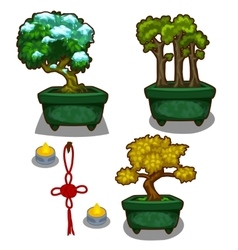 Three little tree bonsai candles and decoration vector image