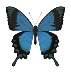 Butterfly isolated on white vector