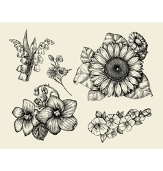 Flowers hand drawn sketch flower sunflower vector