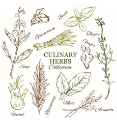 Hand drawn culinary herbs set vector