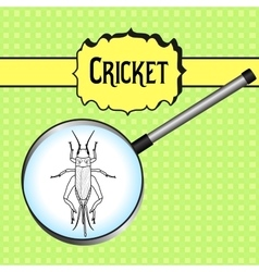 Insect in magnifier cricket grig gryllus vector