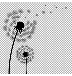 dandelion with transparent background vector image