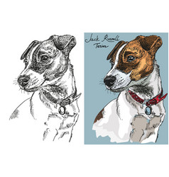 Jack russel terrier in color and black and white vector