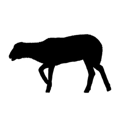 Lamb on white vector image