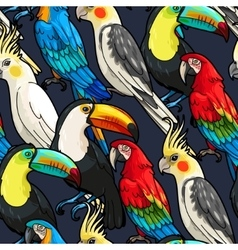 Seamless macaw and toucan vector