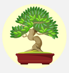 Bonsai japanese art form using trees grown in vector
