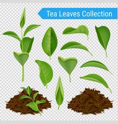 Realistic tea leaves transparent set vector
