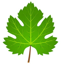 Green wine leaf vector