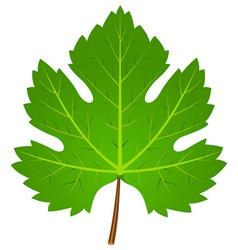 Green Wine Leaf vector image