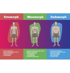 Men body somatotypes vector