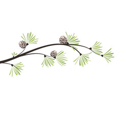 Branches pine vector