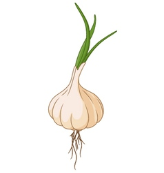 garlic for you design vector image vector image