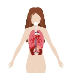 half body woman body with inner organs vector image