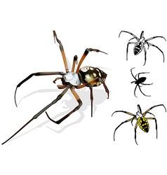 Wasp spider vector