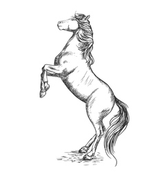 White horse rearing on hind hoof sketch portrait vector