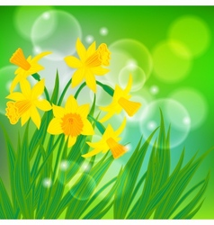card with daffodils on light green bokeh vector image