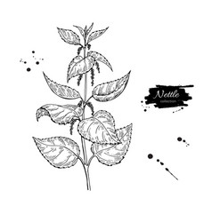 Nettle drawing isolated medical plant with vector