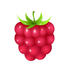 Raspberry vector