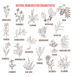 best herbal remedies for conjunctivitis vector image vector image