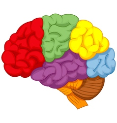 Cartoon colorful brain vector