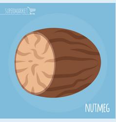 nutmeg flat design icon vector image