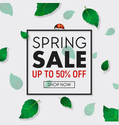 Spring sale background banner with frame vector