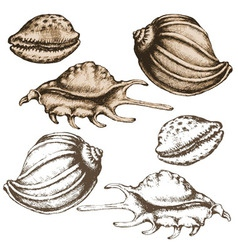 shell sketch vector image