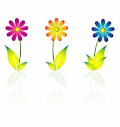 Daisy flowers vector