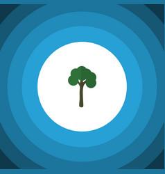 Isolated garden flat icon evergreen vector
