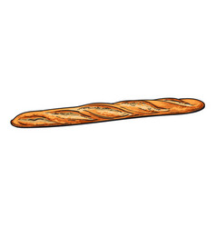 Sketch fresh french bread baguette isolated vector
