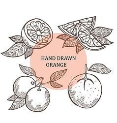Hand drawn orange fruits vector