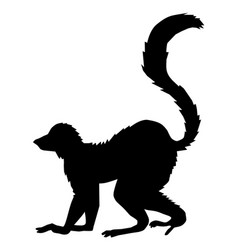 Tropical animal lemur vector