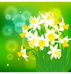 card with white daffodils on light bokeh vector image