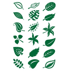 leaves collection vector image vector image
