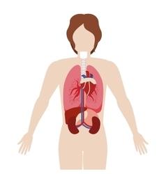 Half body man body with inner organs vector