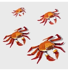Red crab isolated vector