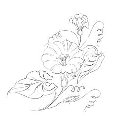 Bindweed flower in white vector image