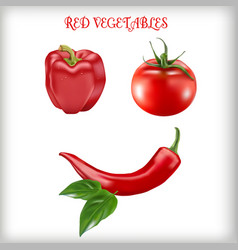 set of red vegetables vector image